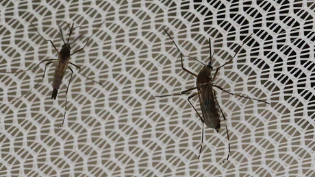 Brazil using drones to fight Zika, Cuba deploys army