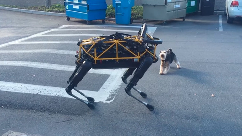 Terrier shows Google robo-dog who's the boss (VIDEO)
