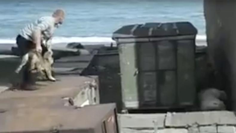 Man throws live dog to polar bear in Russia's Far East [DISTURBING VIDEO]