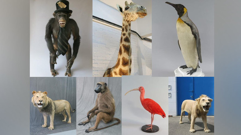 Beastly crime: £100k worth of stuffed animals stolen from London taxidermy warehouse