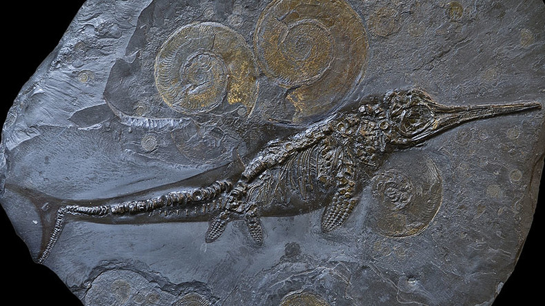 Dinosaur denial? Study suggests ichthyosaurs died out failing to embrace change