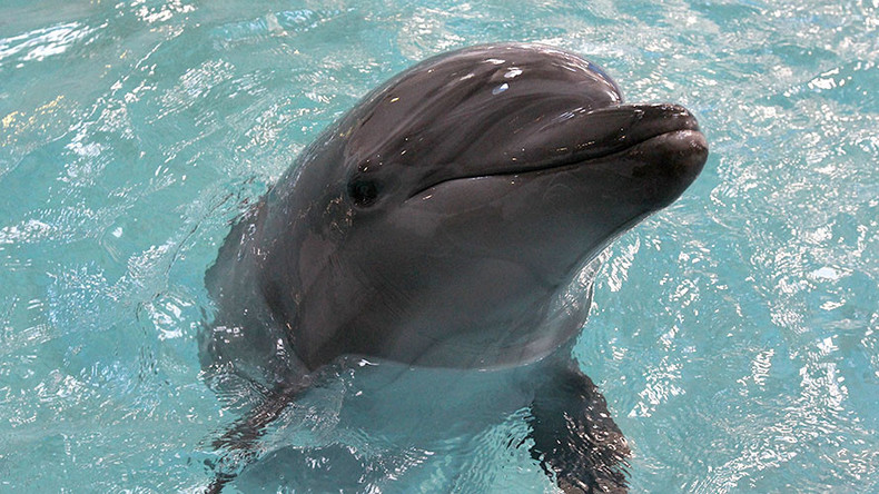 Russian military to buy 5 dolphins, purpose undisclosed