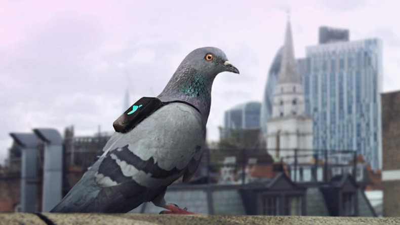 Pigeons with backpacks livetweet London's pollution hotspots (PHOTOS, VIDEO)