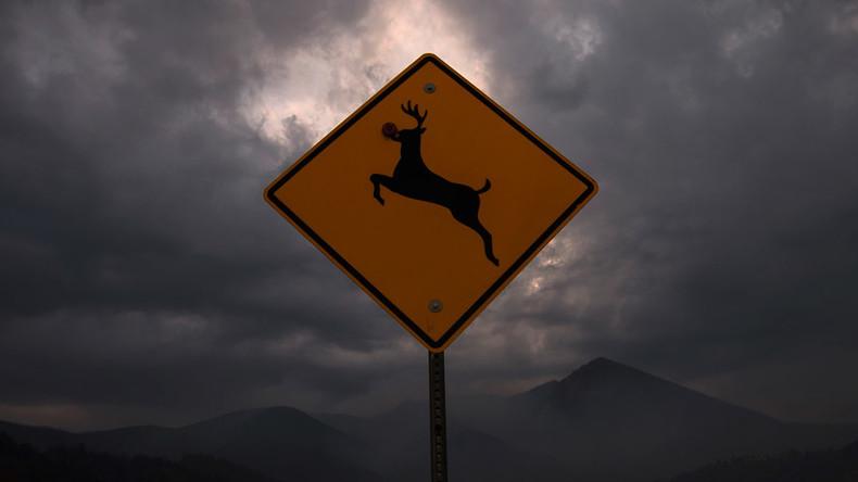 'Suicidal deer' road sign kicks up a ruckus in Iowa