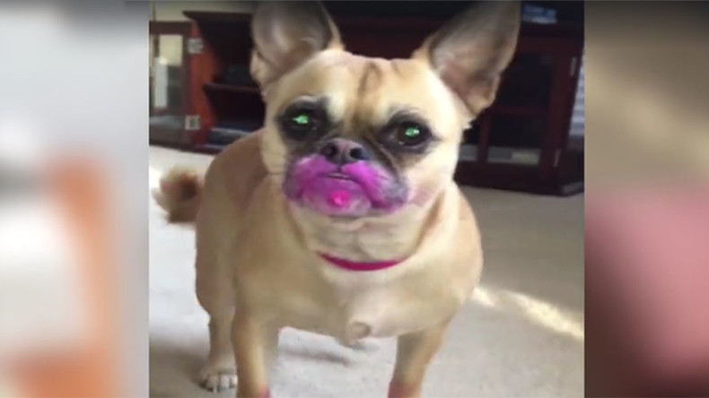 Who's a bad girl? Pink lipstick-eating pooch caught on camera