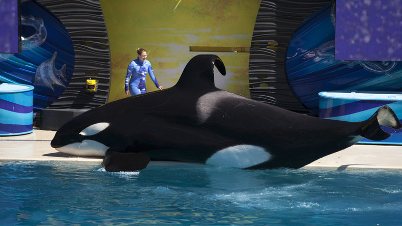 SeaWorld halts captive breeding of killer whales