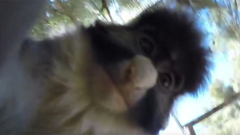 Cheeky monkey grabs camera, shoots short film & bags selfie (VIDEO)