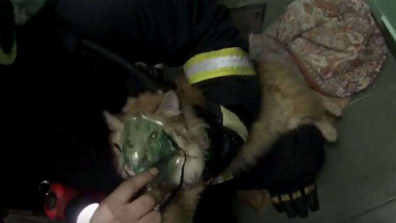 Cat mask fever: Kitty brought back to life by heroic Russian firefighters
