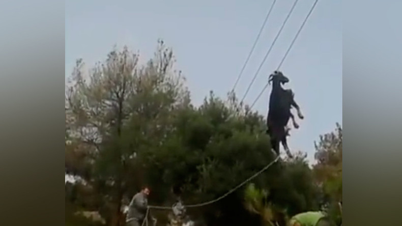 Goat trapped on phone lines freed in bizarre rope & ladder rescue (VIDEO)