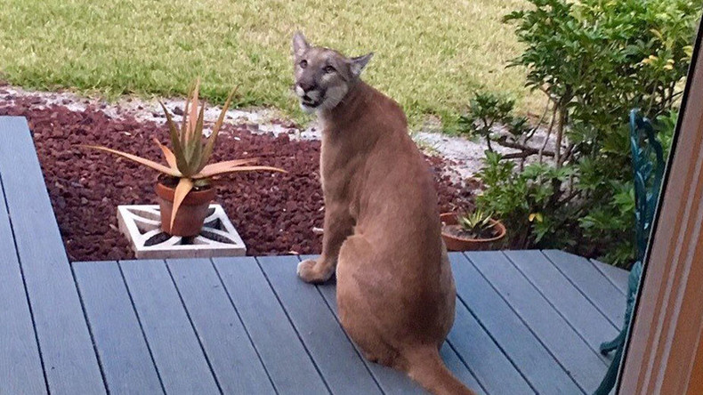 Florida woman comes face-to-face with rare panther on nature trail (VIDEO)
