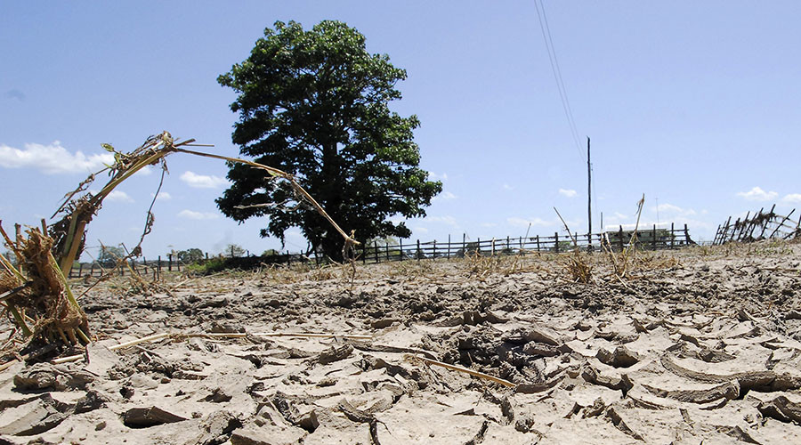 Climate change could devastate UK nutrition, cause 1,200 extra deaths in 2050 – study