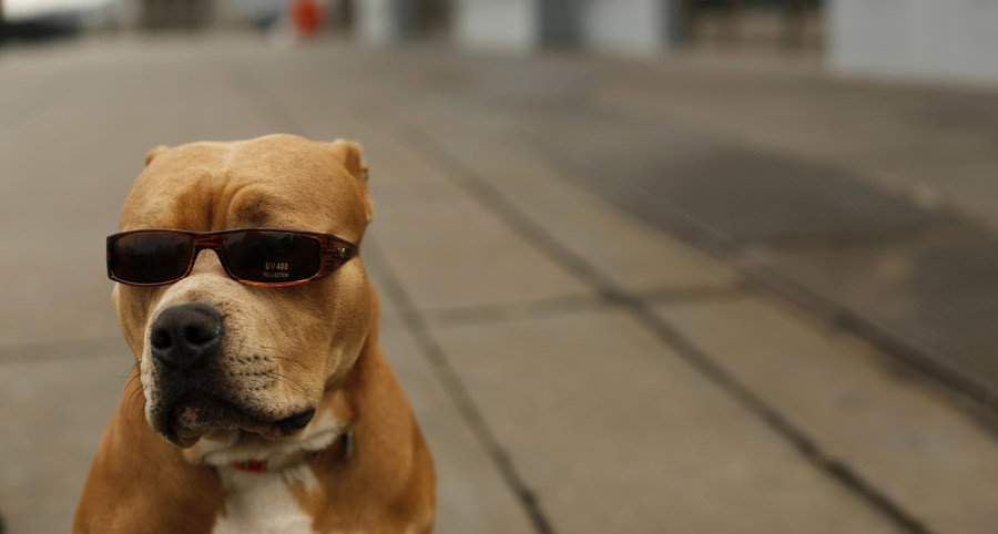 US man's bank payment denied because of his dog's 'terrorist' name