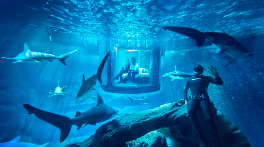 World's first underwater Airbnb lets visitors sleep with sharks (VIDEO)