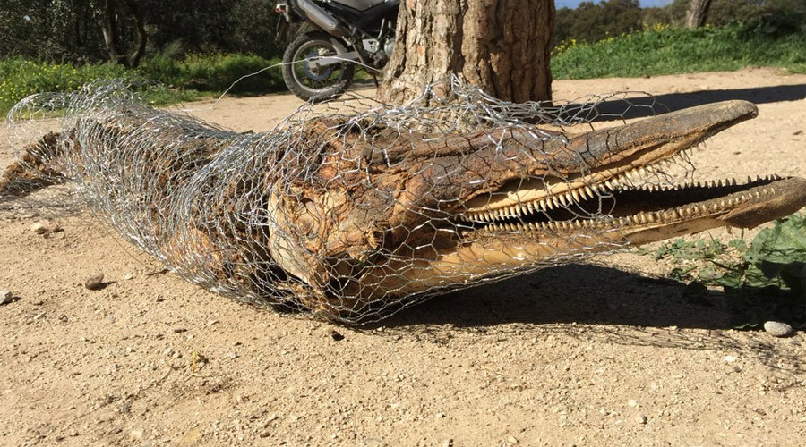 Rotting dead dolphin in Madrid park leaves police baffled (PHOTO)