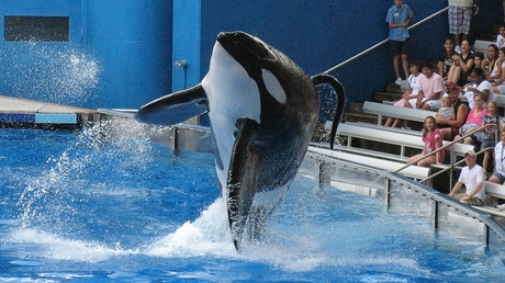 SeaWorld killer whale made infamous by Blackfish gravely ill