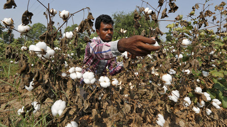 'Greed has to end': India urges Monsanto to accept GM-cotton royalty cuts or leave market