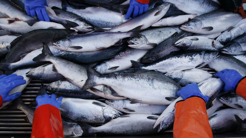 FDA's approval of GMO salmon: What are the environmental risks?