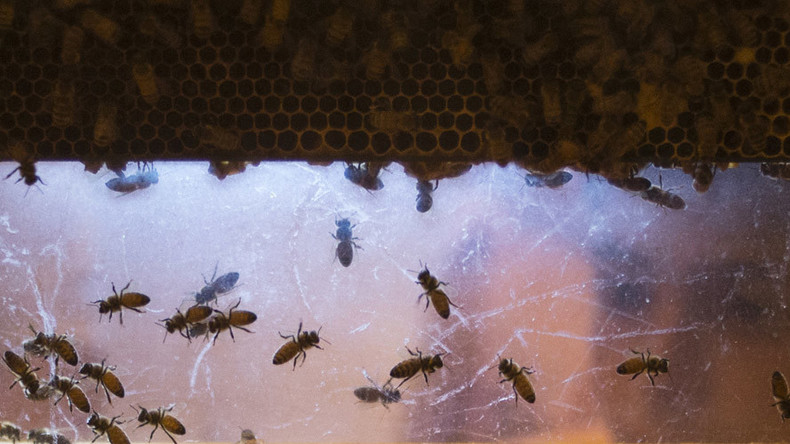 Arizona: Where even the bees are Islamophobic