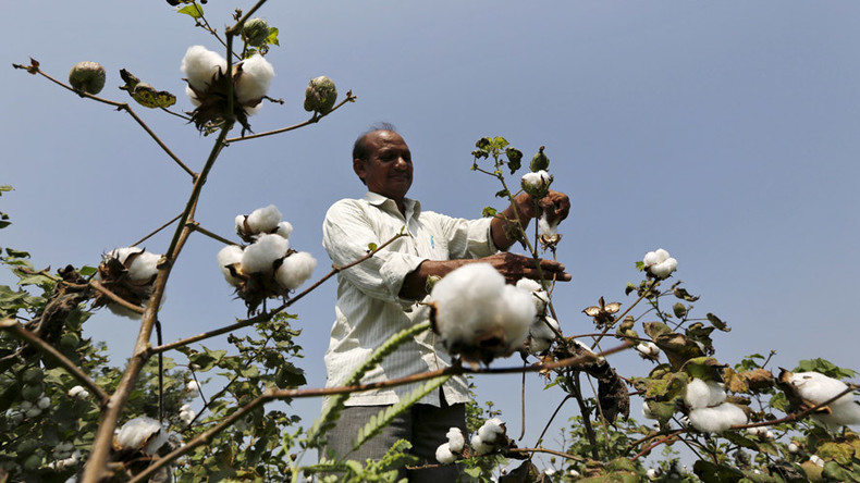 'Monsanto shouldn't be allowed to exploit farmers': India vows to break up GM-cotton monopoly