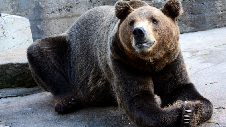 10 times bears were awesome & 9 times they were real (VIDEOS)