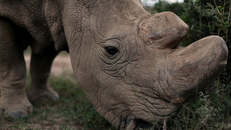 Swaziland anti-poaching finance plan: Sell country's stockpile of rhino horns