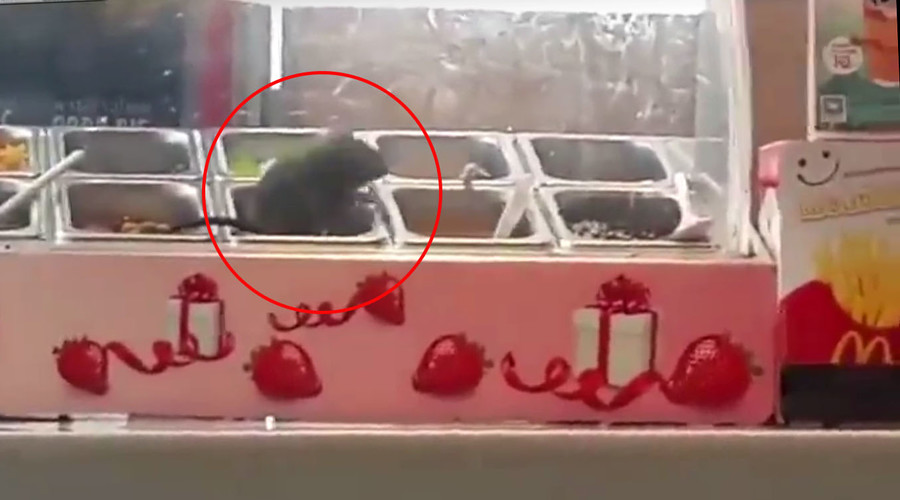 Fro no! Fat rat spotted gorging on yogurt toppings in McDonald's (VIDEO)