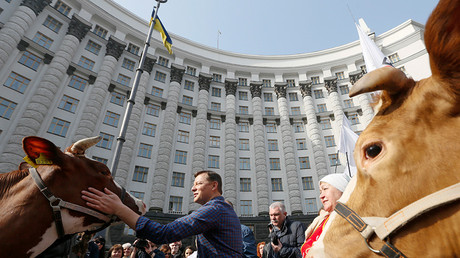 Radical party leader Oleh Lyashko strokes a cow during a rally by Ukrainian farmers, who demand the authorities protect their rights, in front of the government building in Kiev, Ukraine, April 8, 2016 © Valentyn Ogirenko