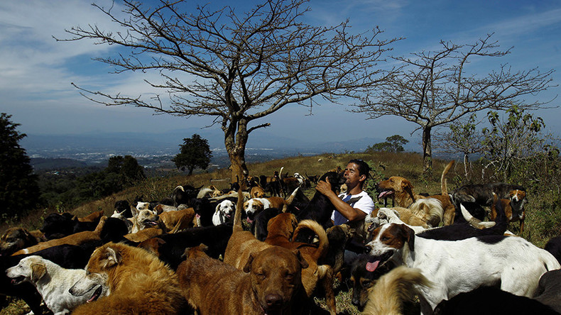 Canine takeover: Hundreds of dogs find paradise in Costa Rica's 'Land of the Strays' (PHOTOS)