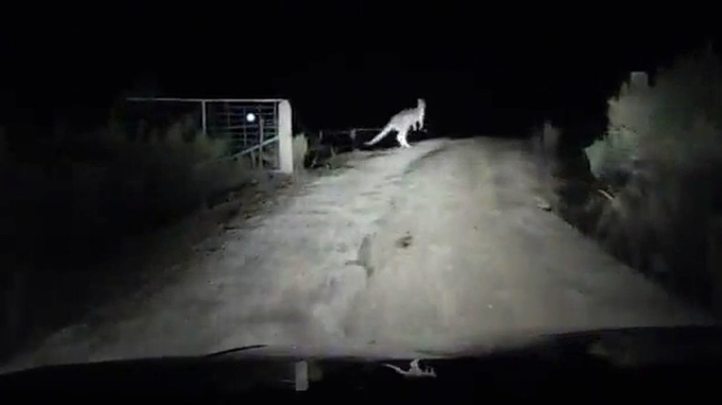 Ninja kangaroo launches night ambush, smashes shocked driver's vehicle (VIDEO)