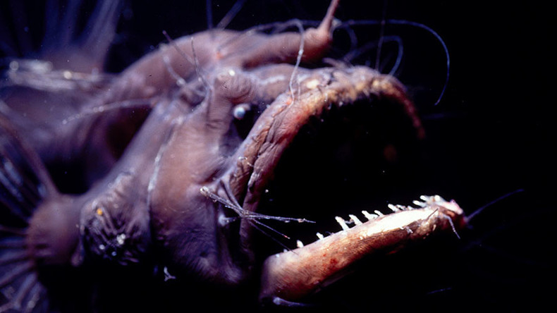 Devils from the depths: Terrifying deep-sea creatures that will give you nightmares (QUIZ)
