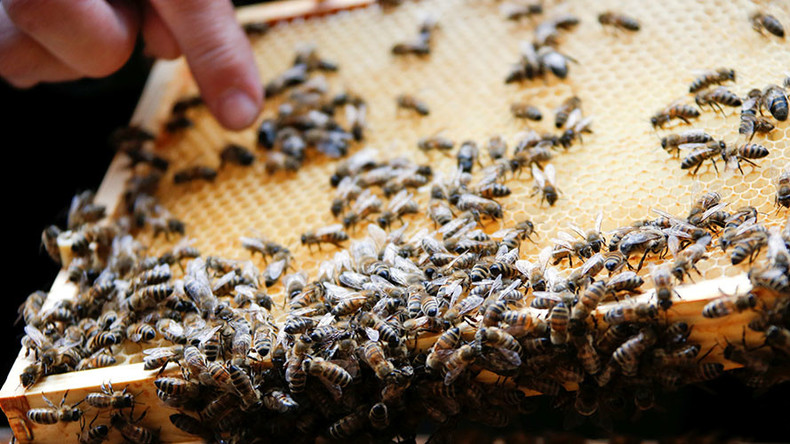 Bee genocide: Nearly half of US honey hives collapsed in