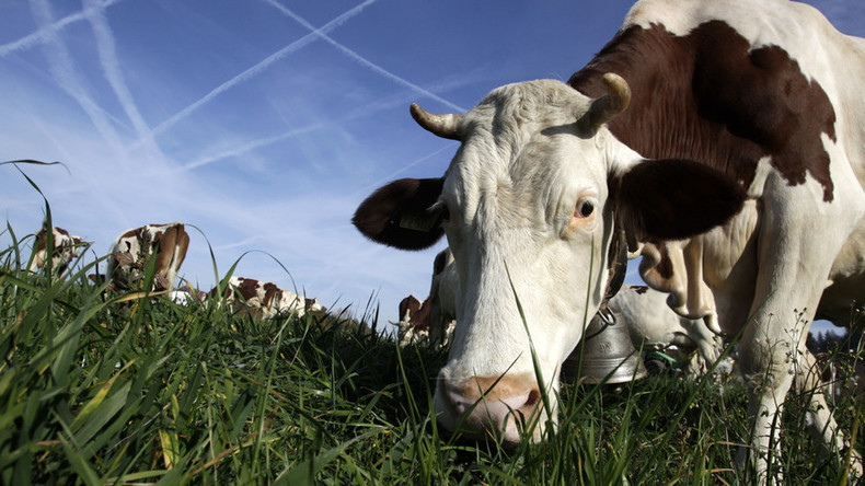 Less cowbell: Swiss farmer defies court order to silence his noisy cows