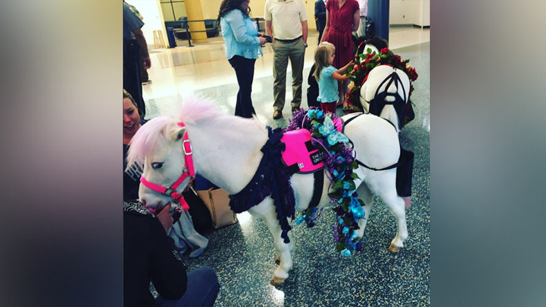 Unicorns, clowns, & music: US airports struggle to ease frustration amid long TSA lines