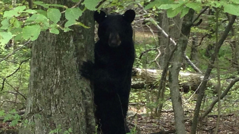 Bear beats Yellow Jackets, leading to NC school lockdown
