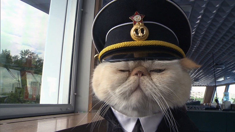 Russian sailor cats melt hearts of passengers cruising between Moscow and St. Petersburg