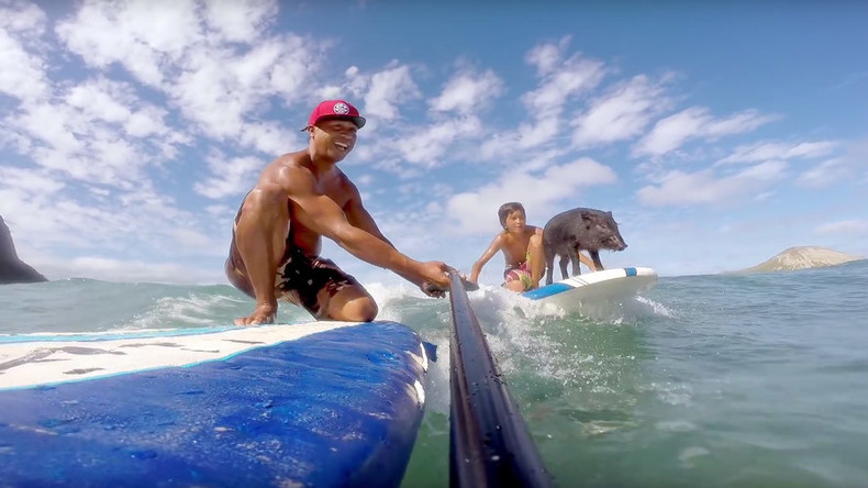 Tiny piglet surfs the waves like a pro in Hawaii (VIDEO)