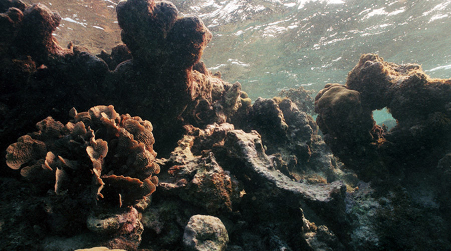 Coast to ghost: Florida's coral reefs dissolving 'just like a sugar cube'