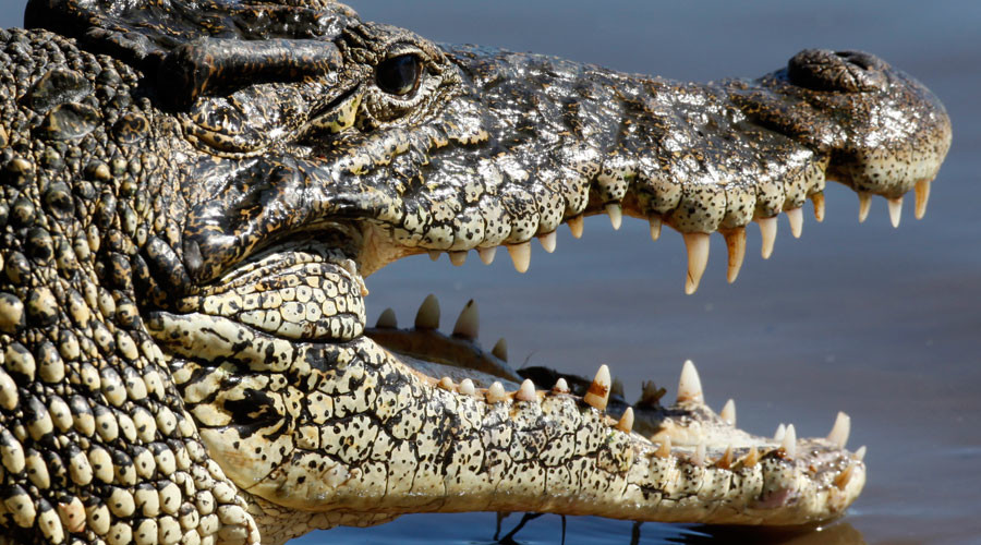 72yo fights off crocodiles with spanners in vain attempt to save drowning friend
