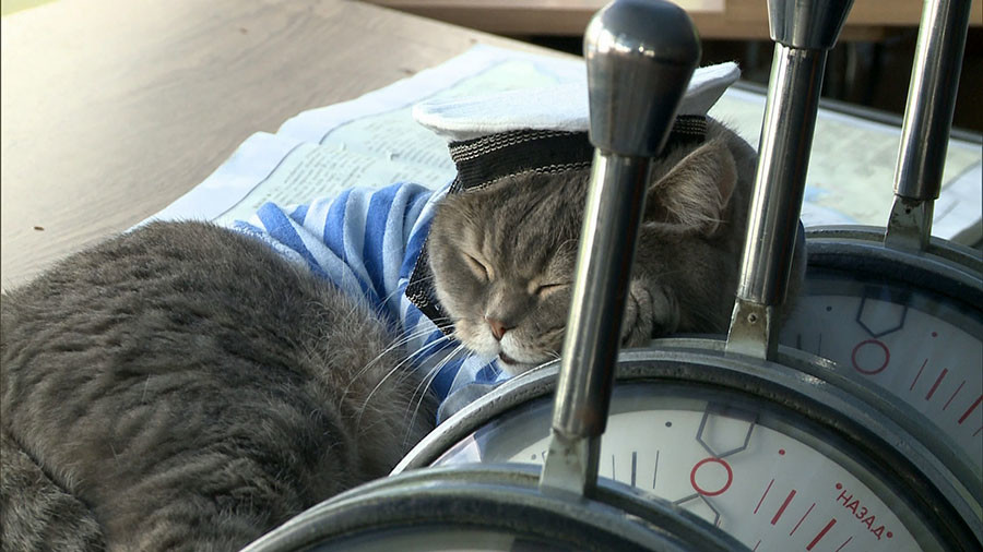 Russian Sailor Cats Melt Hearts Of Passengers Cruising Between - Cat dressed in tiny sailors outfit becomes captain of russian cruise ship