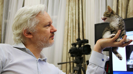 WikiLeaks founder Julian Assange holds up his new kitten at the Ecuadorian Embassy in central London, Britain, in this undated photograph released to Reuters on May 9, 2016. © WikiLeaks