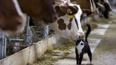 Thai & Chinese investors to build $1bn dairy plant in Russia