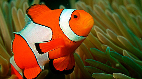 Killing Nemo: Hype over Disney sequel could damage exotic fish populations
