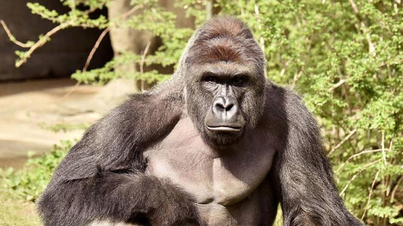 Cincinnati Police launch probe into family of child who fell into zoo's gorilla enclosure
