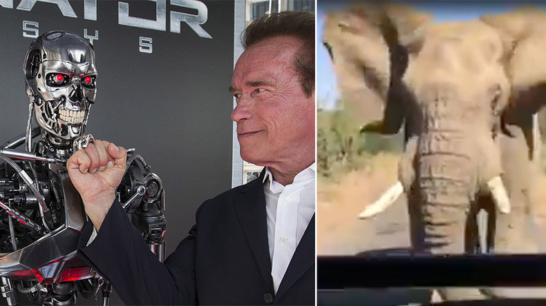 Arnold Schwarzenegger captures close encounter with enraged elephant on safari (VIDEO)