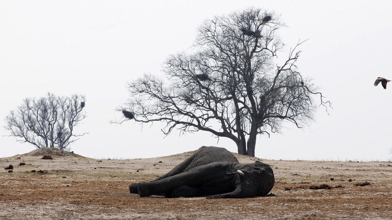 Near-total ivory ban issued in US to protect endangered African elephants