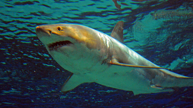 Shark 'bigger than a boat' kills Aussie, 2nd fatal attack in a week