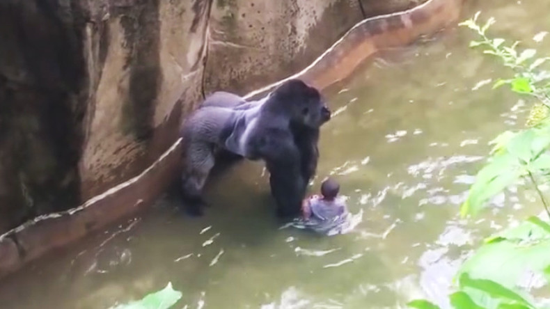 No charges for 'attentive' mother in Cincinnati Zoo gorilla death