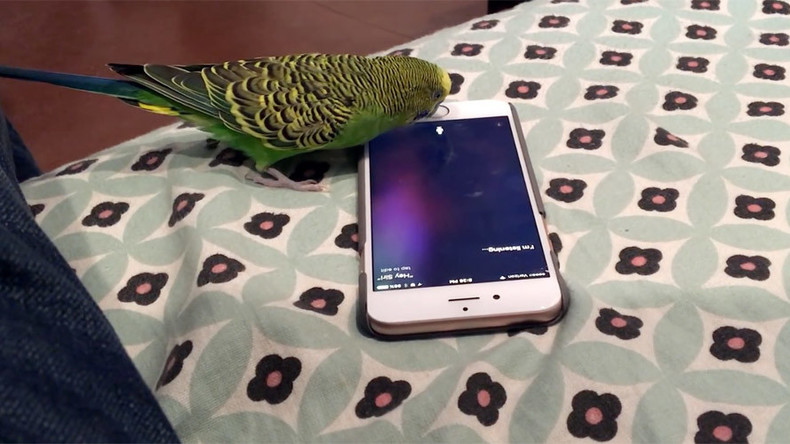 iPhone has Siri-ous conversation with parakeet (VIDEO)