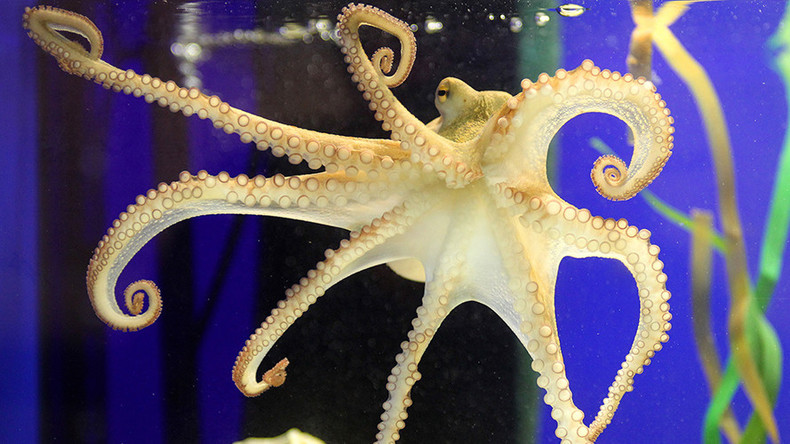 Paul the Octopus or Bob the Sloth: Who's your favorite psychic animal from the world of sports?