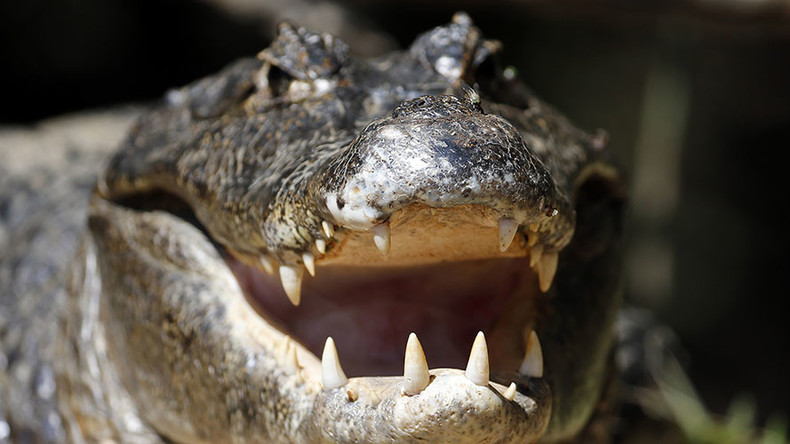 Gator attacks 2yo boy & drags him into water near Disney's Orlando resort